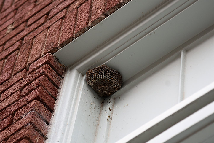 We provide a wasp nest removal service for domestic and commercial properties in Newbury Park.